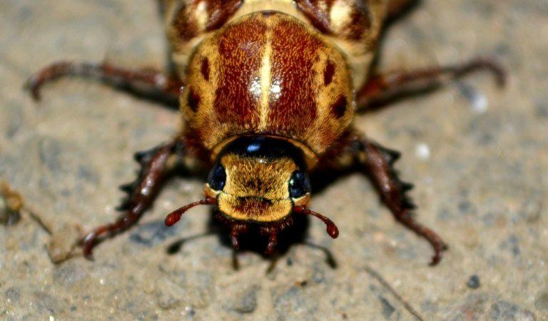 Odpowiednie metody realizowania zwalczania owadów